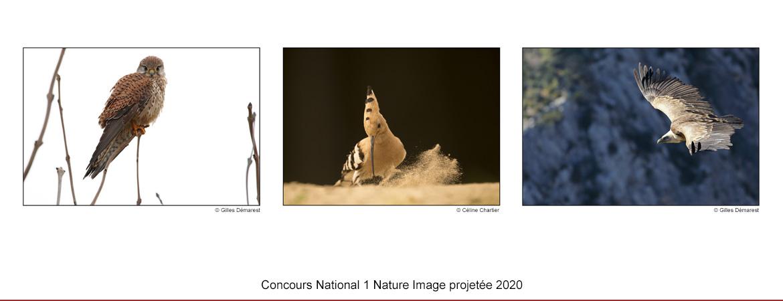 N1NIP-2020.jpg